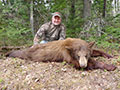 : Mike Queen of Oklahoma with a Great Color Phased Black Bear he arrowed the 1st evening of his hunt. :: Spring 2014