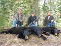 Tim Stockdill, Bruce Haugen, and Scott Stockdill with their day 3 bears that they harvested in a matter of a couple hours apart. :: Spring 2014